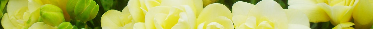 Flower Banner for Spring Gallery