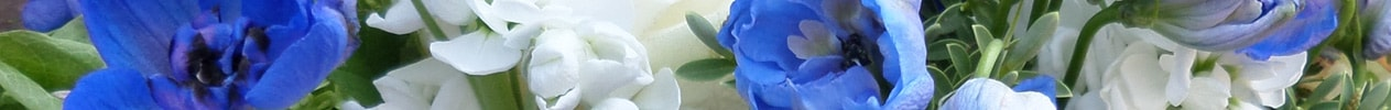 Flower Banner for Cool Blues Gallery